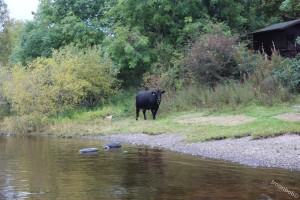 Loch Ken 022